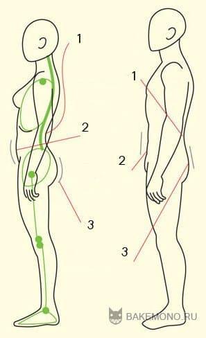 Изгиб спины у женщин