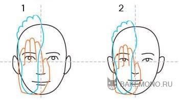 Пропорции руки и ноги относительно лица
