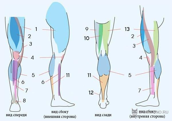 Основы рисования ног