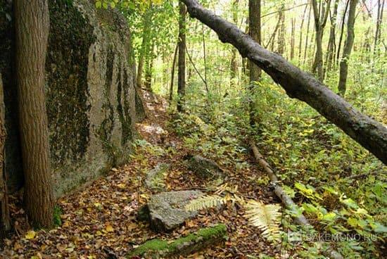 изображение леса