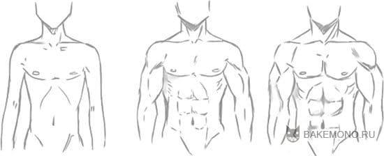 3 типа телосложений парней