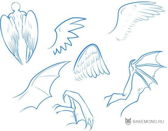 типы крыльев