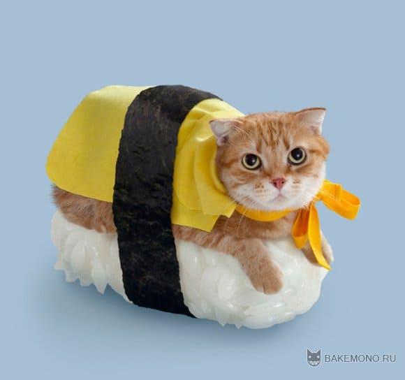 Некодзуши - и кот и суши