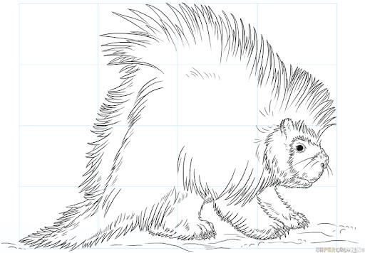 Рисунок дикобраза с мягкой шерсткой