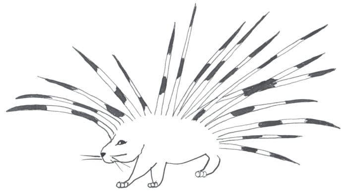 Рисунок дикобраза для детей
