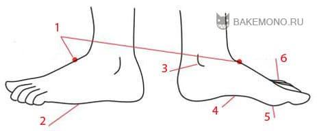 различия между внутренней и внешней стороной стопы