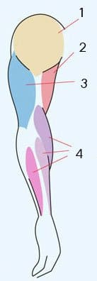 Расслабленная (внешняя сторона) руки
