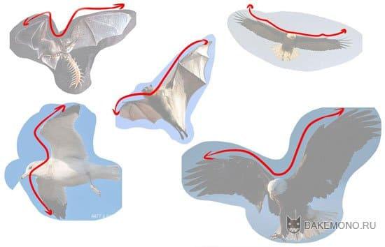 картинки аниме волков с крыльями: