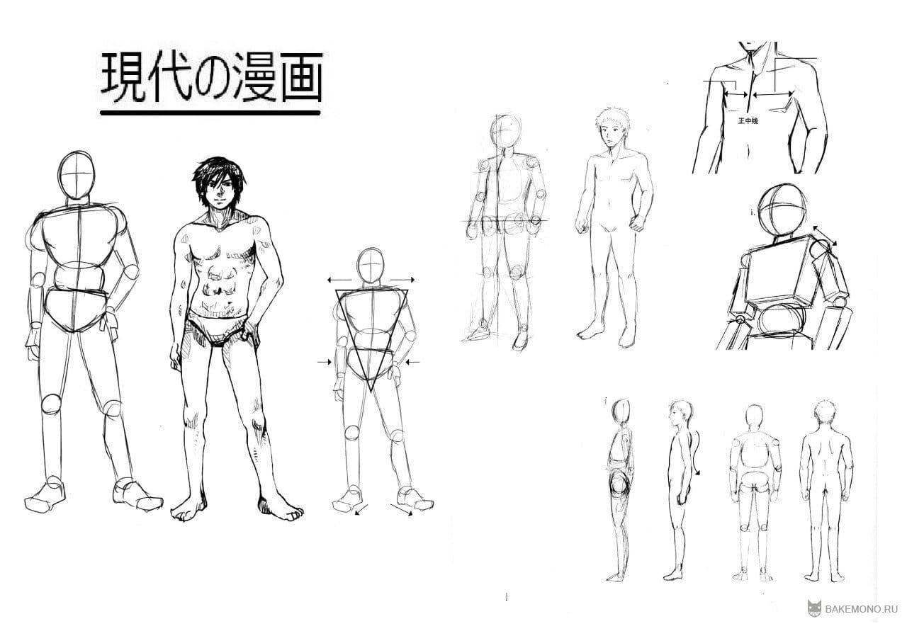 как правильно рисовать фигуру человека: